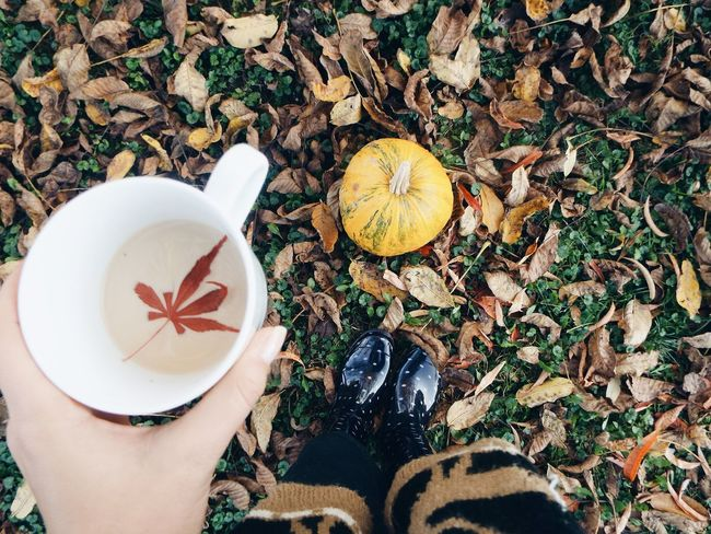 High Angle View Autumn Directly Above Leaf Outdoors Nature Close-up Maple Leaf Pumpkin Enjoying Life Coffee Cup Taking Photos Relaxing Coffee