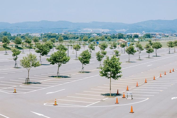 Trees in parking lot