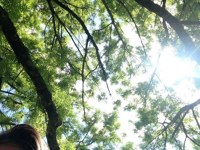 Pardon. Relaxing Nature_collection Sky Three Sun Green Sunny Day Taking Photos Hello World Good Morning