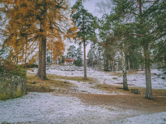 Trees on snow covered land during autumn