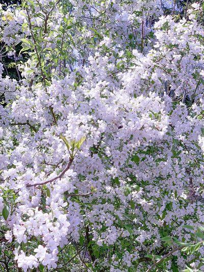 Flower Full