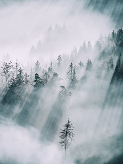 Sunlight falling on trees in forest during foggy weather