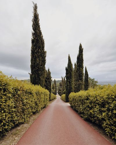 Tuscany Toscana Italia Italy EyeEm Selects Tree Pine Tree Pinaceae Rural Scene Sky Cloud - Sky Landscape Plant vanishing point Diminishing Perspective Empty Road The Way Forward Asphalt Passing Passageway Blooming Country Road Pathway