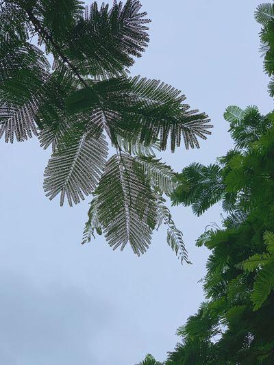 Plant Tree Low