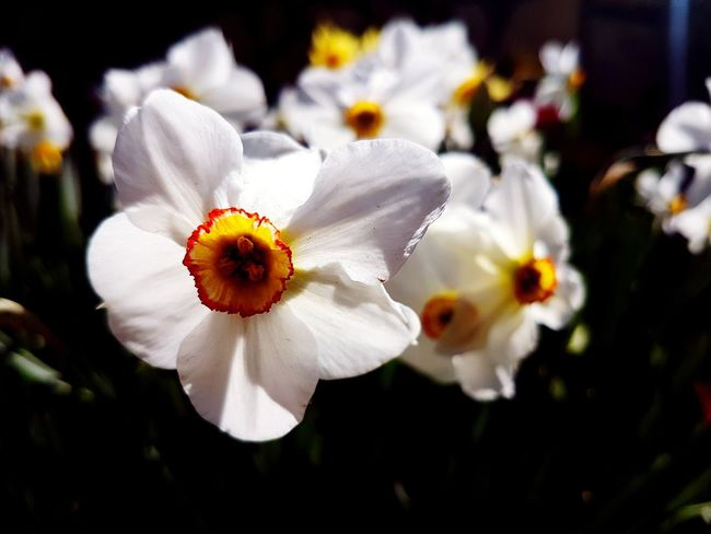 White Flower White Colors Colorful Spring Flower Head Flower Petal White Color Springtime Pollen Close-up Plant Wildflower Blossom Blooming Plant Life In Bloom EyeEmNewHere