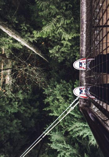 The awesome Capilano Suspension Bridge Tree Top Walk. Fujifilm X-T1 w:XF16mm f1.4 WR Capilano Suspension Bridge Capilano Tree Tops Nature Nature Is Beautiful Converse Feet Fuji Fujifilm_xseries FUJIFILM X-T1 Fujifilm Fuji X-T1 Fujifilmxt1 5YearsofXSeries Myfujifilm XF16mmF1.4 Wanderlust