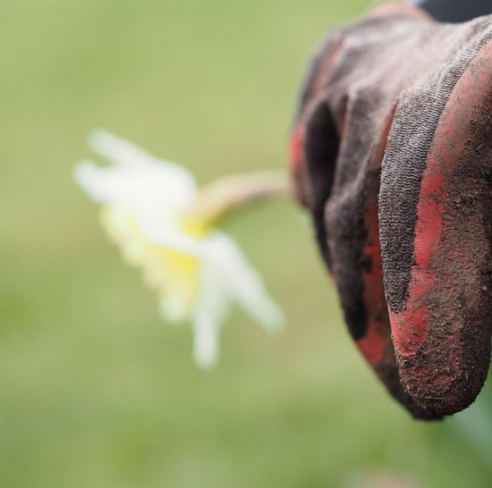 Beauty In Nature Close-up Day Flower Flower Head Focus On Foreground Fragility Freshness Glove Gloves Nature No People Outdoors