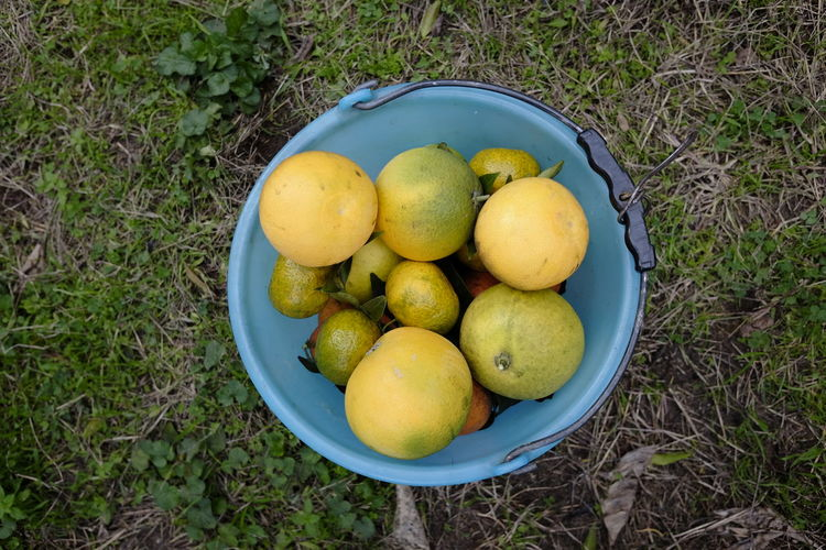 High angle view of fruits in basket on field