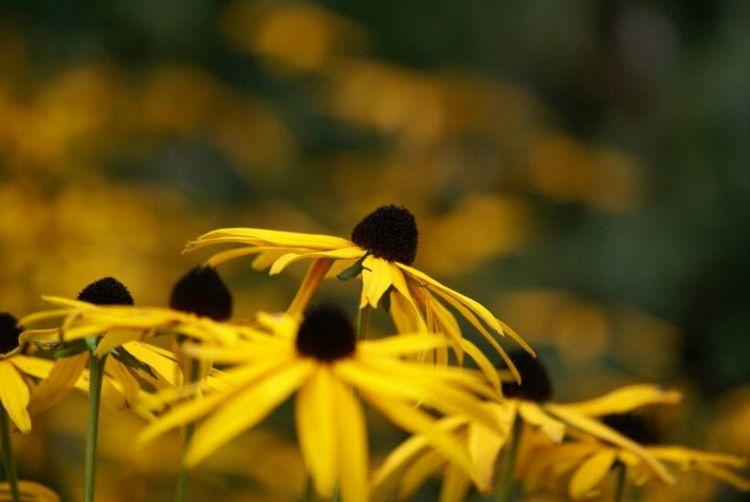 Flowerporn EyeEm Best Shots - Nature Nature_collection Eebest