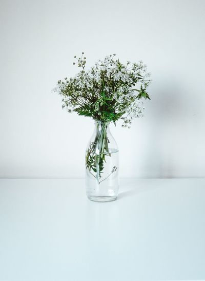 Close-up of flower vase on table against white background