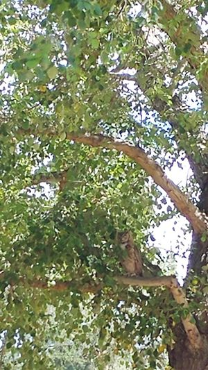 Owl be seeing you Owl Arizona Wildlife Tree Branch Flower Leaf Green Color