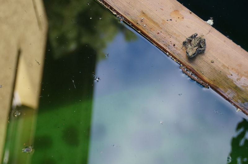 High angle view of toad on wood in pond