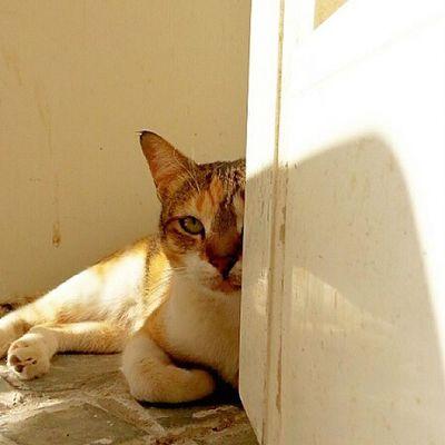 Nos kitty ? Kitty Cat Instacats Streetcat meow cute albateen uae abudhabi kitten animals street wild winter sun