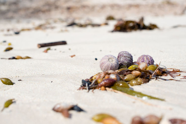 Surface level of sea urchins and seaweeds at beach