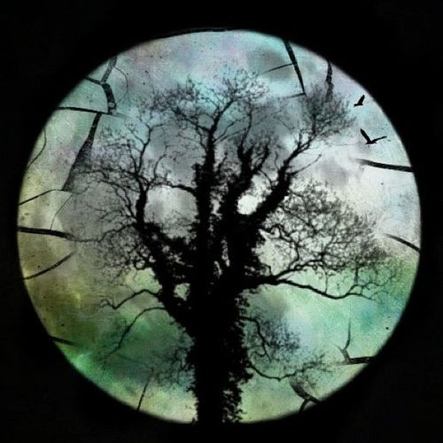 Igdungeon Rsa_dark Masters_of_darkness Graphic_dark_arts Rsa_light Dark_meets_light Silhouette_saturdays Moon_awards Moon Tree Silhouette Cracks