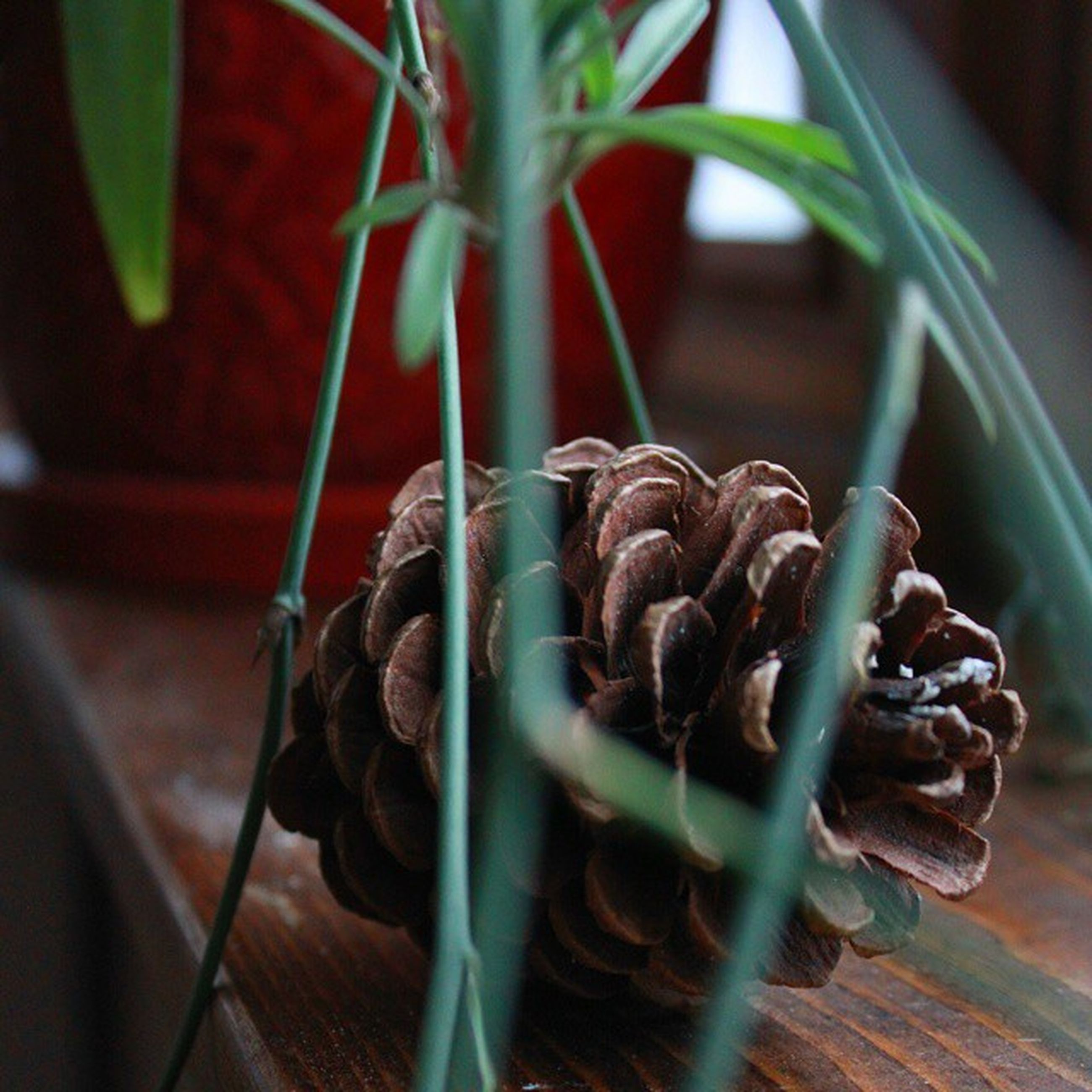close-up, focus on foreground, metal, still life, indoors, selective focus, plant, no people, day, leaf, rope, growth, tied up, sunlight, metallic, high angle view, nature, hanging, brown