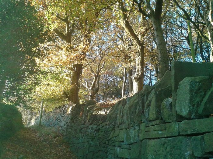 Autumnbeauty Autumn Leaves Drystonewalls Pathways Autumnleaves Landscape Beauty In Nature Sunlight Sunbeam Pathway Tranquility Tree Trunk Shadow Autumnbeauty Sunset Tranquil Scene Outdoors Scenics Leaves No People Beauty In Nature Day Nature