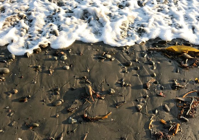Ocean, foam, near sand, sea, water, white, contrast,
