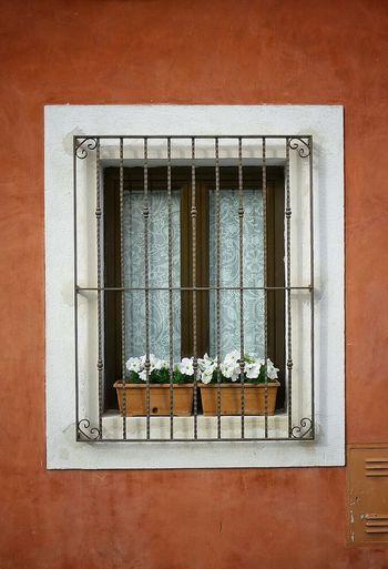 Flower pots on window of house