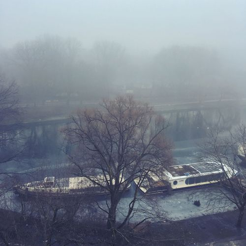 Bare trees in foggy weather during winter