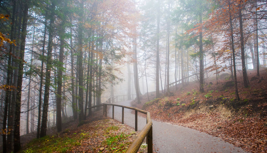 Autumn forest road, Fussen, Germany Tree Forest Land Plant Autumn Nature The Way Forward WoodLand Direction Road Tranquility Footpath Fog Beauty In Nature Scenics - Nature Non-urban Scene No People Day Tranquil Scene Change Outdoors