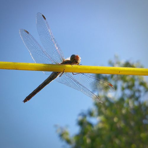 Sky Nature Tranquility Outdoors Fragility Dragonfly