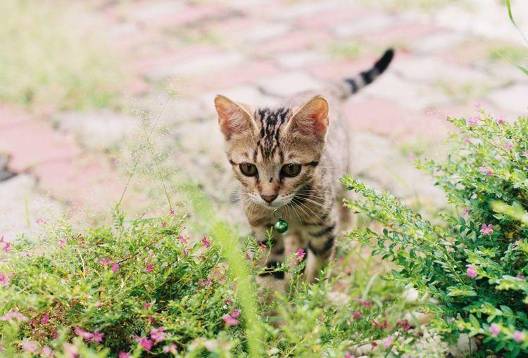 Kitten Cute Cat