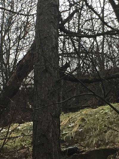 Le même écureuil 🤗
