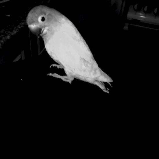 First photo! ? Mybird