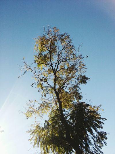 Trees And Sky Wilde Plaza Cielo Arboles Sol Sunlight