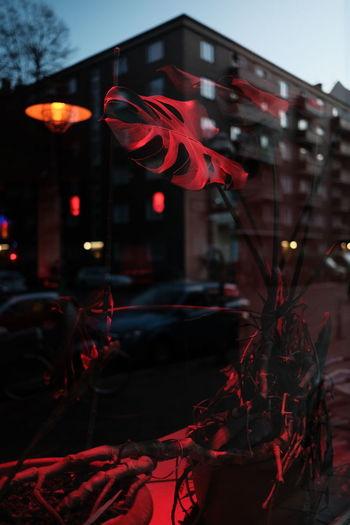 Close-up of illuminated red building at night