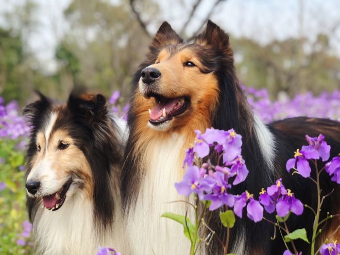 Animal Themes Domestic Animals Flower Mammal Focus On Foreground No People Nature