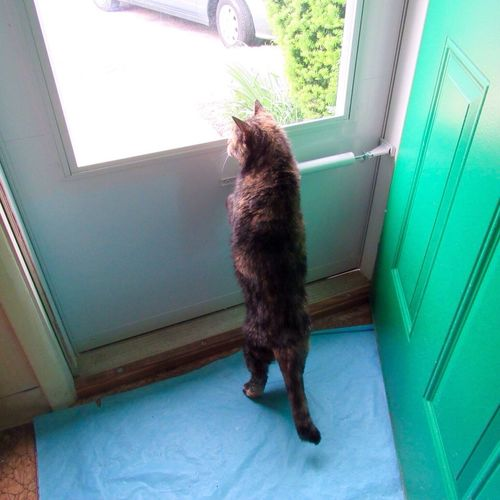 Oh boy, I can see out this new door 😺 Home Improvement Animal Themes One Animal Domestic Pets Domestic Cat Entrance Door Window Indoors