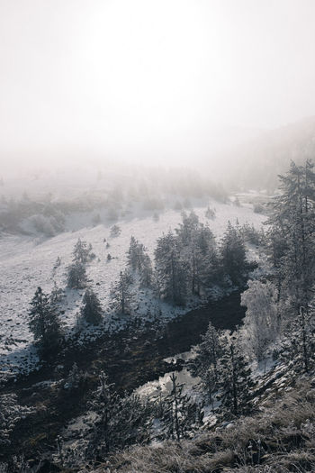 Winter in Serbia. Beauty In Nature Cold Temperature Day Fog Forest Growth Landscape Mountain Mountain Range Nature No People Outdoors Pinaceae Pine Tree Pine Woodland Scenics Sky Snow Tranquil Scene Tranquility Tree Winter