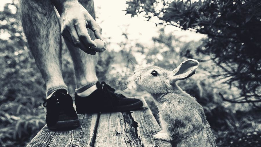 Close-up of rabbitl about to jump onto a park bench