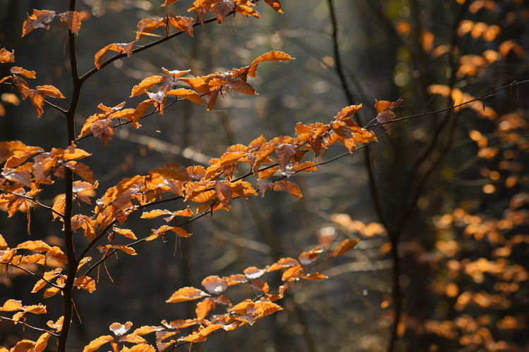 Autumn in the forest with some nice sunlight Nature Leaf Leaves Tree Autumn Sunlight Day Outdoors Tranquility Change Plant Growth Branch Close-up Beauty In Nature No People Selective Focus Orange Color Natural Condition Focus On Foreground Plant Part Germany Bavaria Franconia Nuremberg