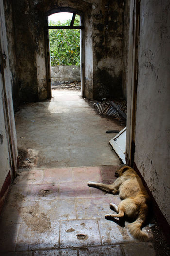 Abandoned Animal Themes Architecture Built Structure Day Dog Domestic Animals Entrance Indoors  Mammal No People Obsolete Old Ruin Sleeping Dog Urban Decay Weathered
