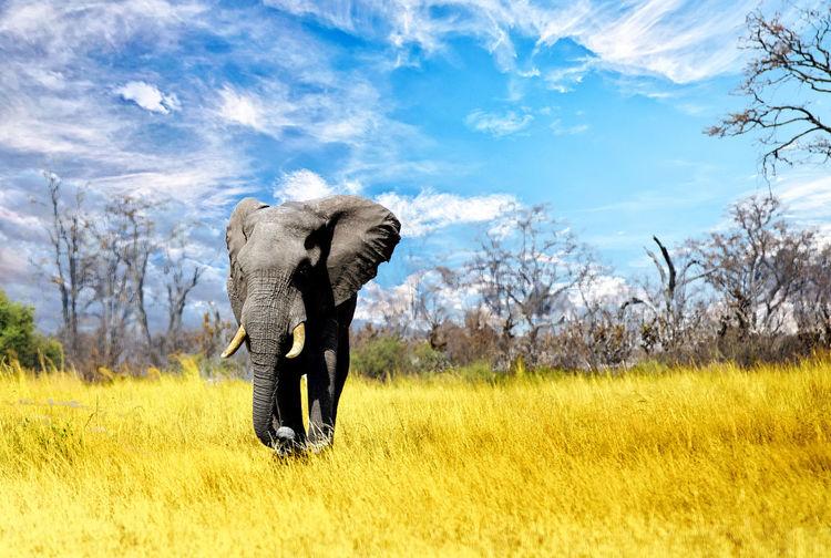 Elephant On Field Against Sky