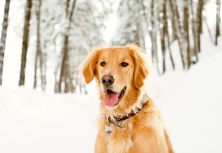 Close-up of dog on snow