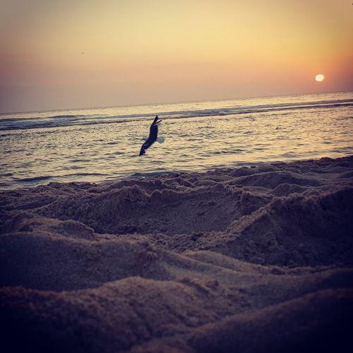 Sunset by the sea Lisbon Romantic Sky Seascape Coast Seagull Sea Bird Horizon Over Water Moody Sky