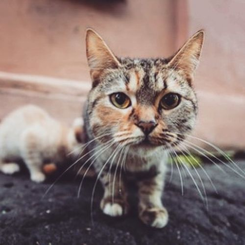Yo Yoshkarola Homeless Cats Animals Kitty кошки бездомныеживотные Streetcats Catslife Instacat