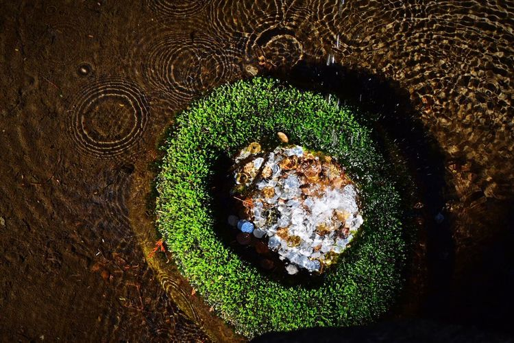 Concentric Circles Ripple Effect Different Circles A Circle Within A Circle Water_collection Water Surface Water_collection Nature Photography
