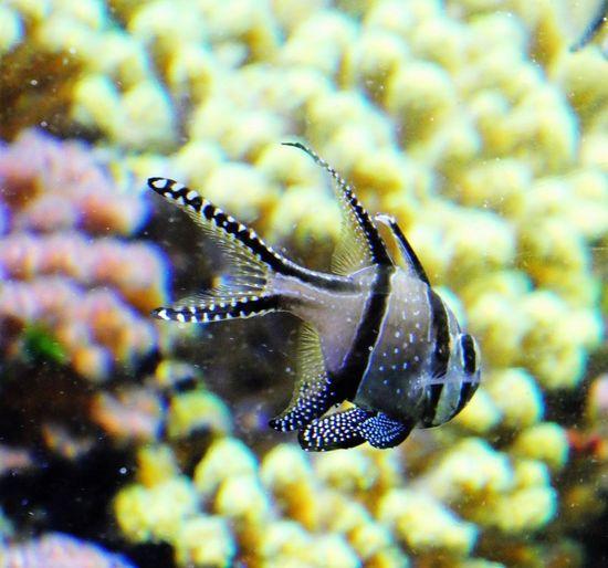 UnderSea Sea Life Underwater Sea Multi Colored Swimming Fish Water Close-up