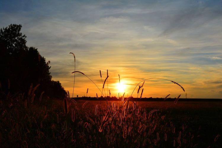 Melegnano Milan Sunset Silhouette