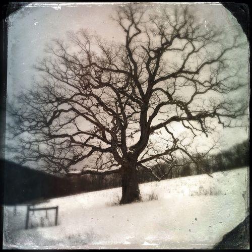 Hipstamatic Nature Tree Winter