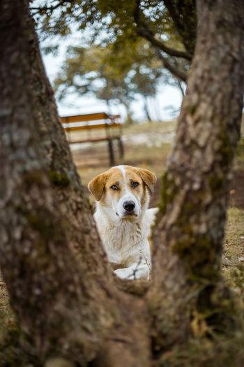 Portrait of dog on tree trunk
