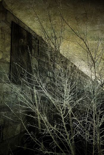 """""""Winters Toll"""" New Mexico Photography New Mexico Light And Shadow Moody Winter Stone Wall Bare Branches Bare Trees Bare Tree"""