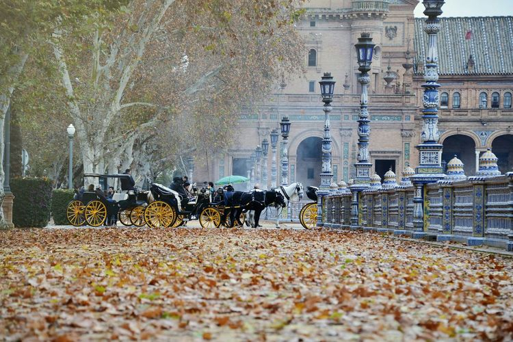 Hello World Travel From My Point Of View Horses Tourists Winter It's Cold Outside