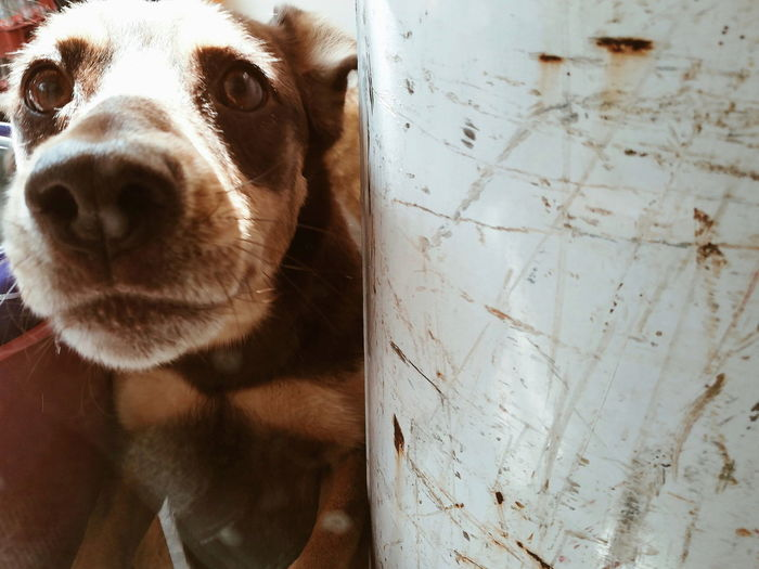 Close-up portrait of dog on floor