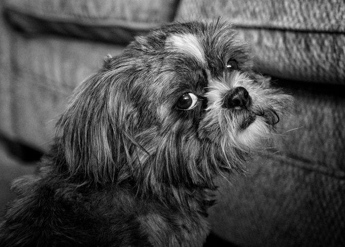 Dogs Eyes Soul